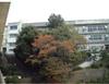 051126yamazakura_kouyou_enkei