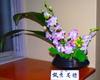 080111kado_3c_unehara_miho20080111