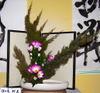 080128kado_3c_sasaki_taemi2008012_2