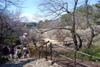 080226bairin_ookurayama20080227_14
