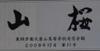 081218kaihouyamazakura_daiji_by_san
