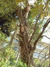 0904_yamazakura1_200611