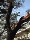 0904_yamazakura3_200611