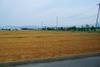 09061920sinsyuji_azumino02_bakusyuu