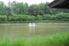 09061920sinsyuji_azumino12_hasuike_