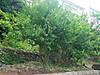 20050915zakuro_2